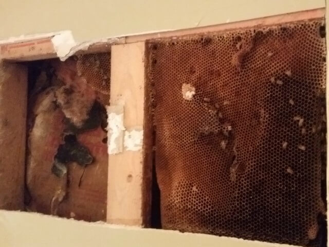 Honey Bees | Cleveland Bee Removal | Bee Control And Removal